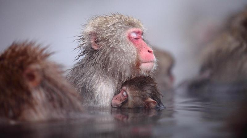 2016   Год огненной обезьяны. Характеристика года. Что нас ждет в 2016?